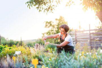 Huertos urbanos y jardineras