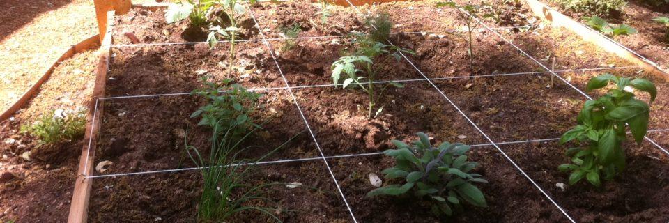 Tus plantas estarán siempre vigorosas y sanas
